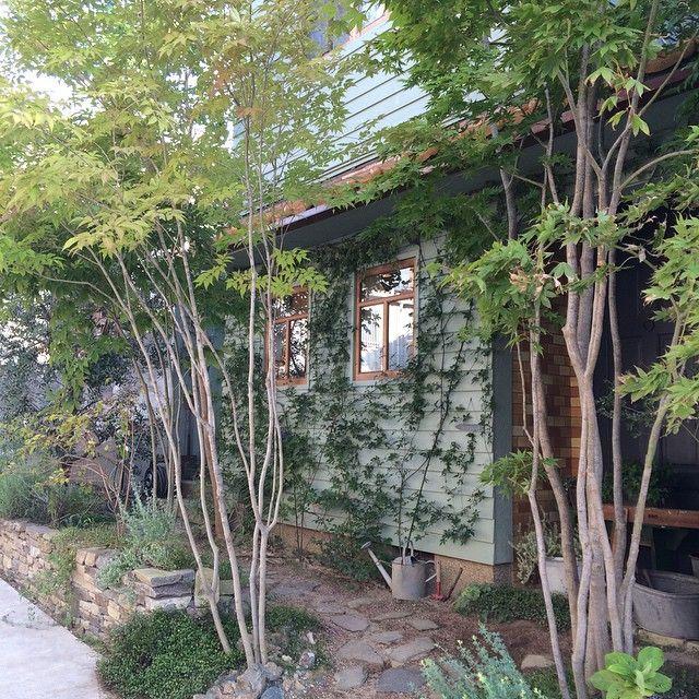 3年前に仕事で作った庭。 年々気持ちがいい。 #雑木の庭 #小道 #GARDEN