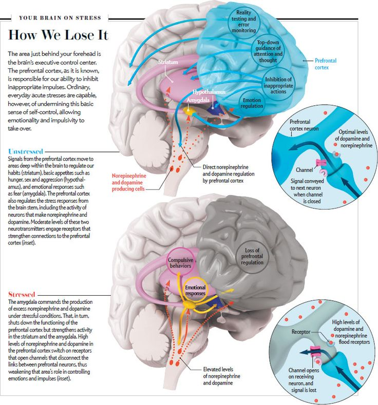 "This is Your Brain in Meltdown. Scientific American SOURCE: ""STRESS SIGNALLING PATHWAYS THAT IMPAIR PREFRONTAL CORTEX STRUCTURE AND FUNCTION,"" BY AMY F. T. ARNSTEN, IN NATURE REVIEWS NEUROSCIENCE, VOL. 10; JUNE 2009"