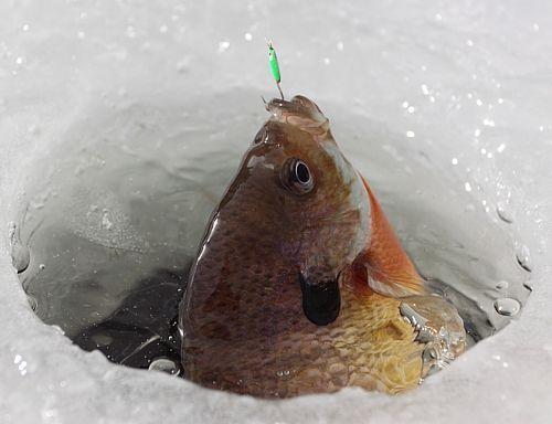 Best 25 ice fishing ideas on pinterest ice fishing tips for Best ice fishing lures for panfish