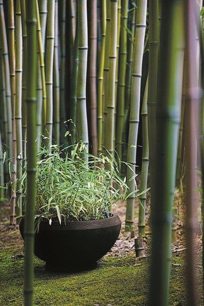 Les 33 meilleures images propos de jardins zen sur for Conception jardin chinois