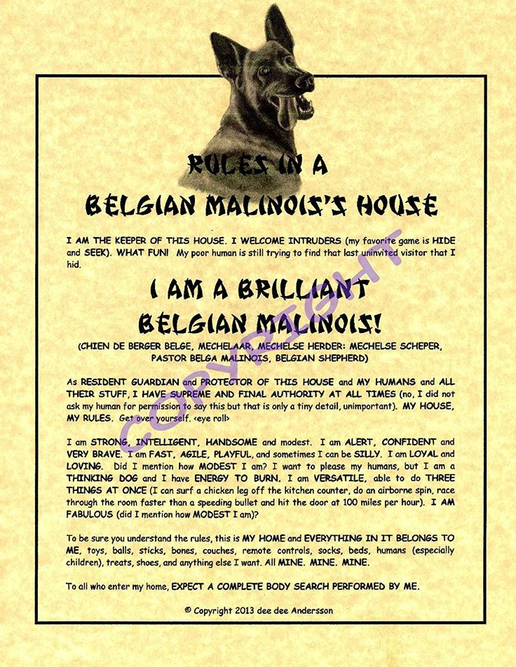 Rules In A Belgian Malinois' House