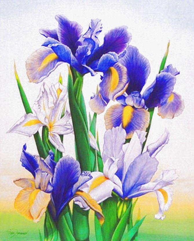Ирисы открытки цветов, распечатать