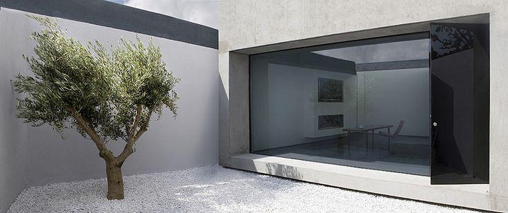 Odos arquitectura_patio y olivo