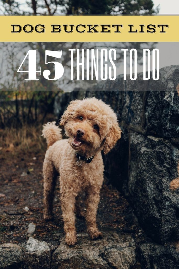 Canine Bucket Checklist: 45 Enjoyable Issues to do With Your Furry Pet