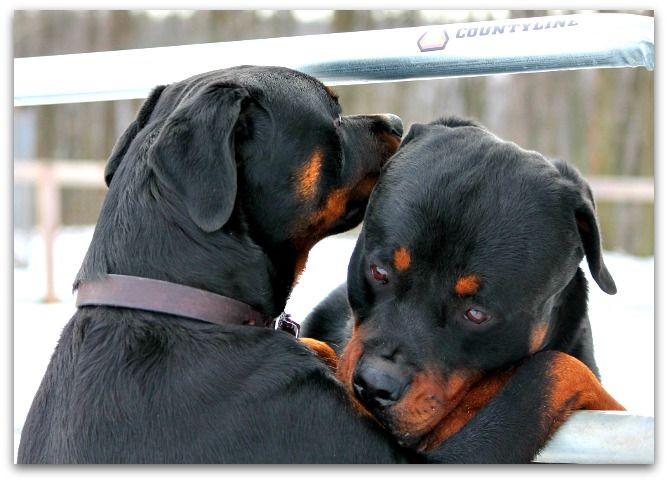 Darla and Sarge