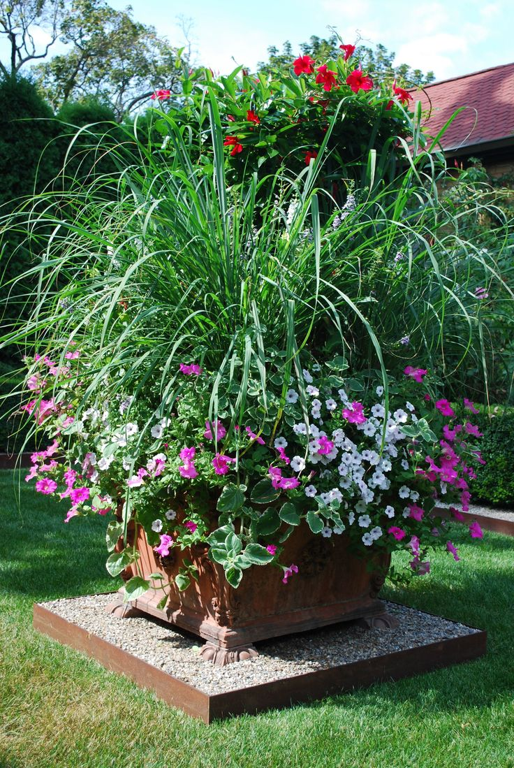 Lemon Grass And Flower Container Garden