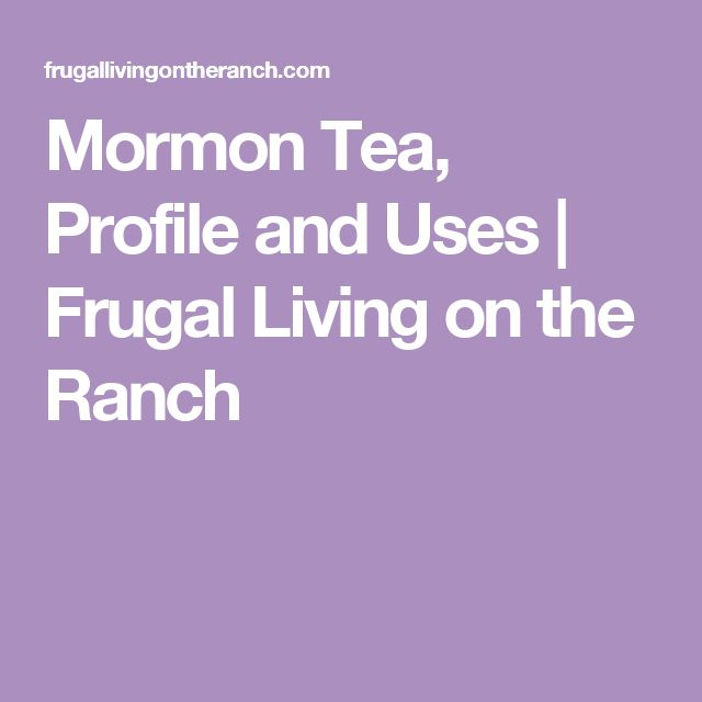 Mormon Tea, Profile and Uses | Frugal Living on the Ranch