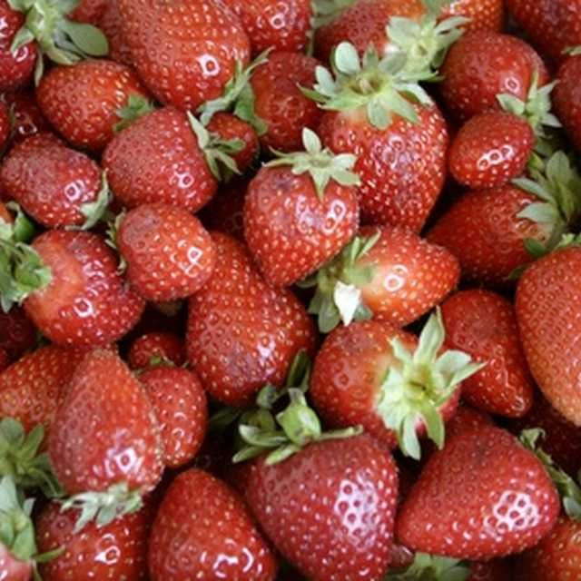 Winter strawberries are a favorite for Florida gardeners.