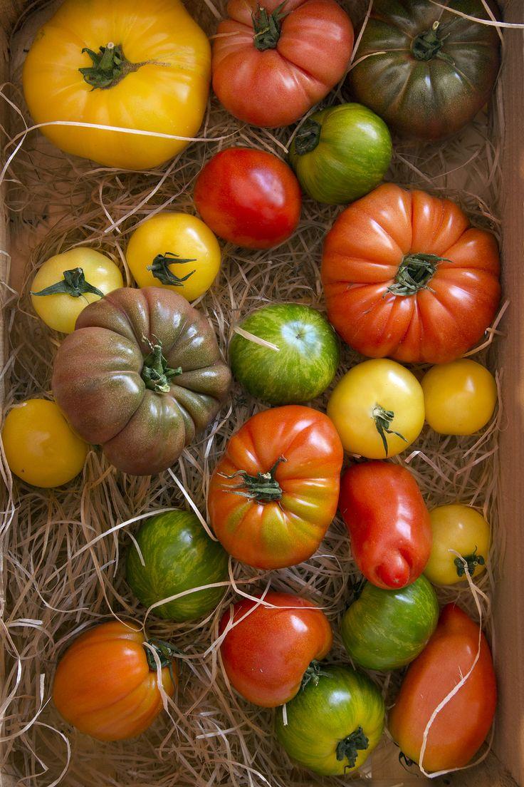 tomates (variétés anciennes) Cœur de bœuf, ananas, noire de Crimée, green zébra, rose de berne, Anna russe, cornue des Andes...