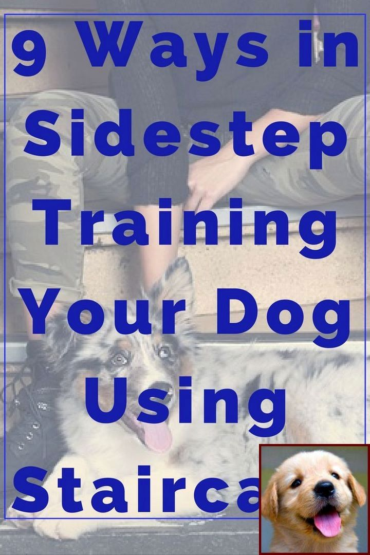 Dog Behavior Trainer Near Me And How Much Are Dog Behavior Classes
