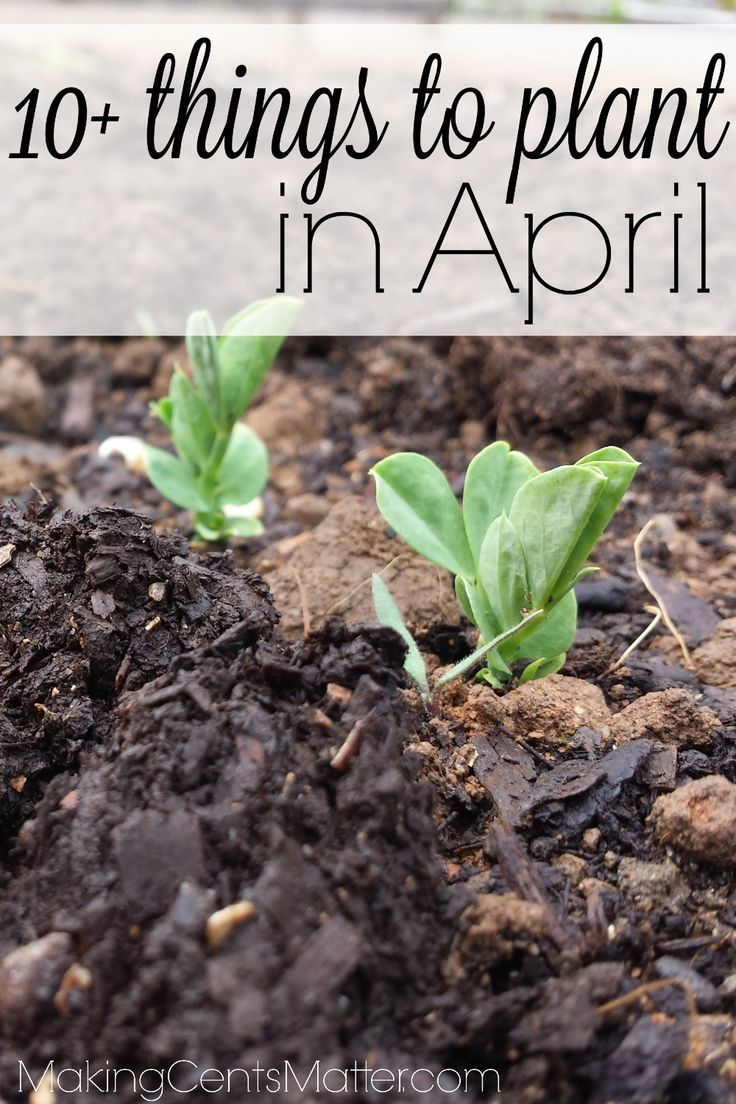 What To Plant In April In Your Zone 5 Garden Plants Garden