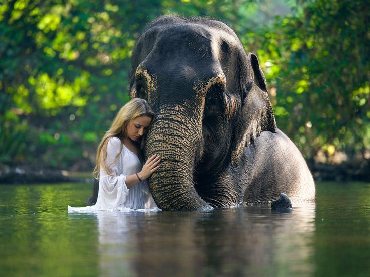 Elephant and the girl swimming in the river