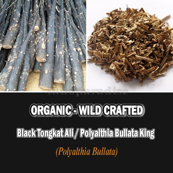 Health Benefits: Increase testosterone levels, Increase Libido, Increase Sperm Count And Quality, Powerful Ejaculations, Better Sex, Increased Fertility, Male Enhancement (Penis Enlargement), Treating Cancer, Anti-bacterial Characteristics, Malaria, Stress Reliever, Anxiety Remedy #tongkatali #libido #penisenlargement