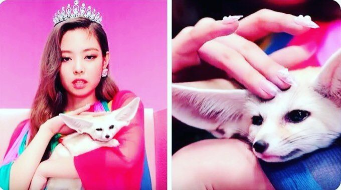 My Favorite Fennec Fox And Jennie Is So Pretty And Cool Fennecfox Jennie Balckpink Ddududdudu