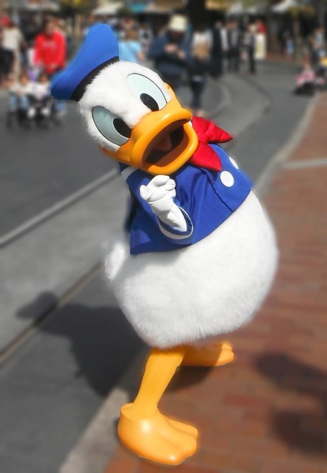 Donald Duck: Donald O'Connor, Disney 3, Disney Obbesse, Disney Donald, Disney Extraordinary, Disney Favorite, Cross Donald, Dame Donald, Disney Characters