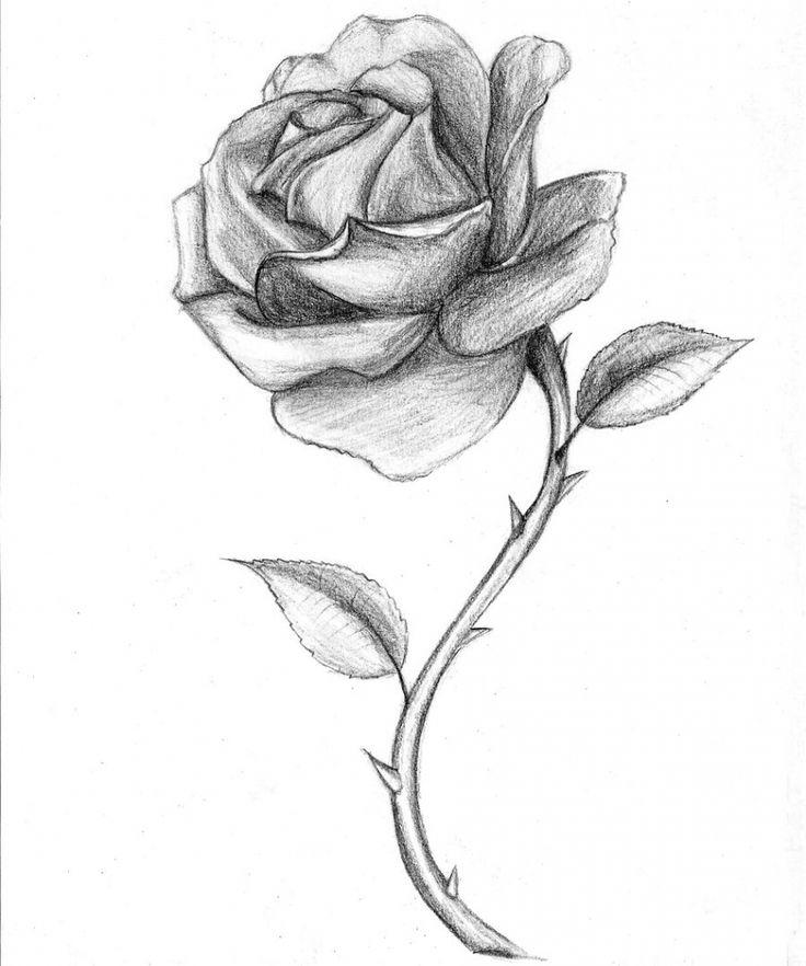 1000+ ιδέες για Rose Drawings στο Pinterest | Ιδέες για ζωγραφική