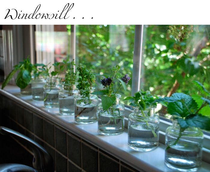 Start herb plants from cuttings - place them in water on your windowsill and in a few weeks, roots will start to grow.