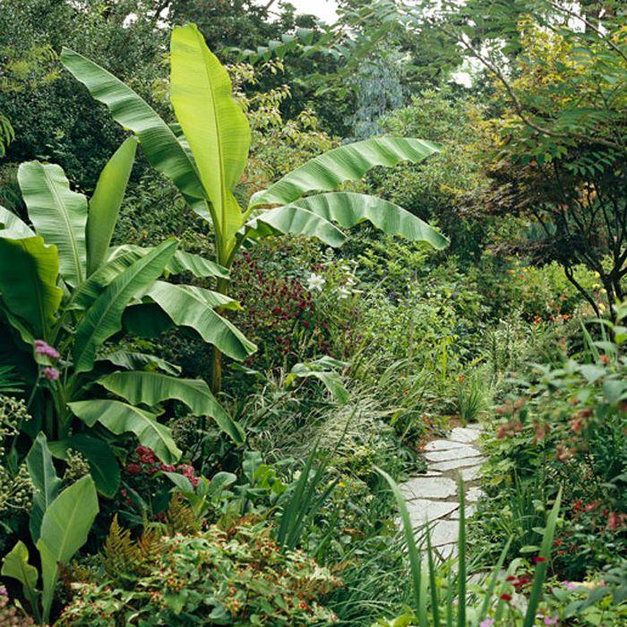 1000 images about tropical landscape ideas on pinterest for Jungle garden design ideas