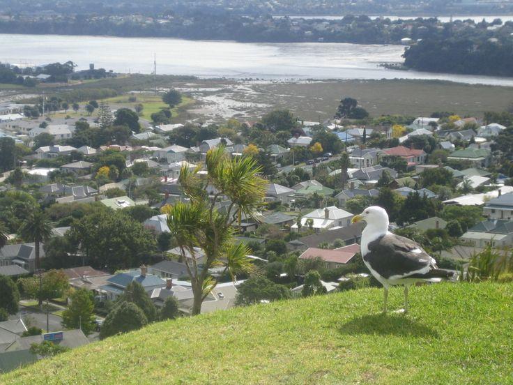 Takapuna in Takapuna, Auckland