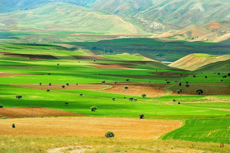 My Armenia