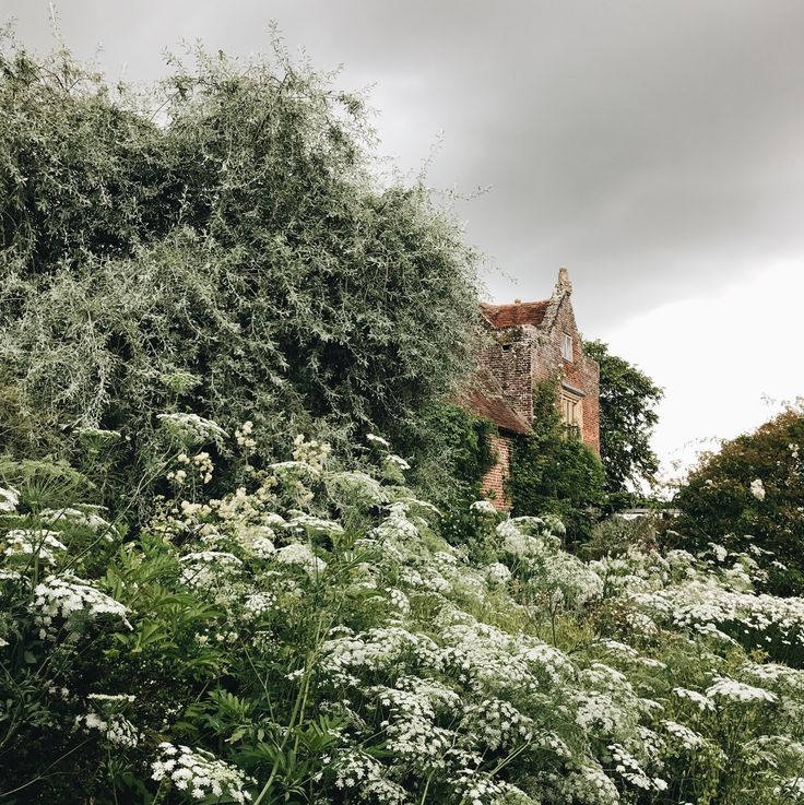 En masse, a sea of white flowers at Sissinghurst