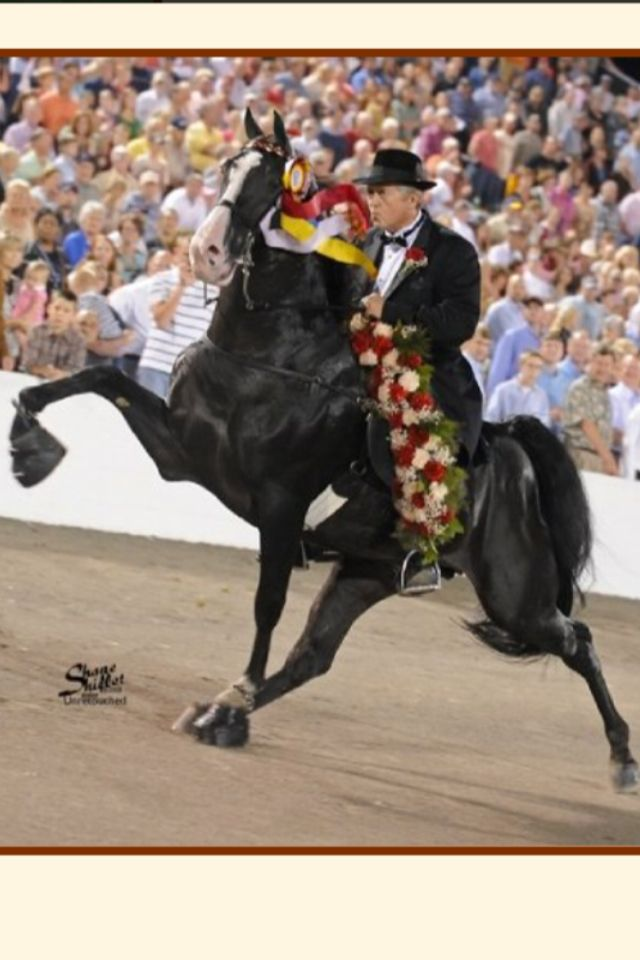 Watch It Now, the 2009 Tennessee Walking Horse National Celebration World Grand Champion!