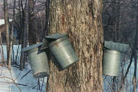 Aylmer Maple Syrup Festival     Maple Syrup Festivals and Sugar Bushes across Ontario are ready to welcome you because it's Maple Syrup Time! There are so many sugar bushes to visit at local farms and Conservation Areas. Be sure to get out and enjoy some fresh air, pancakes with maple syrup and time with your family at one of the…