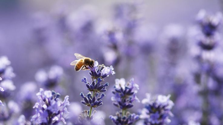 Bee identification guide for beginners