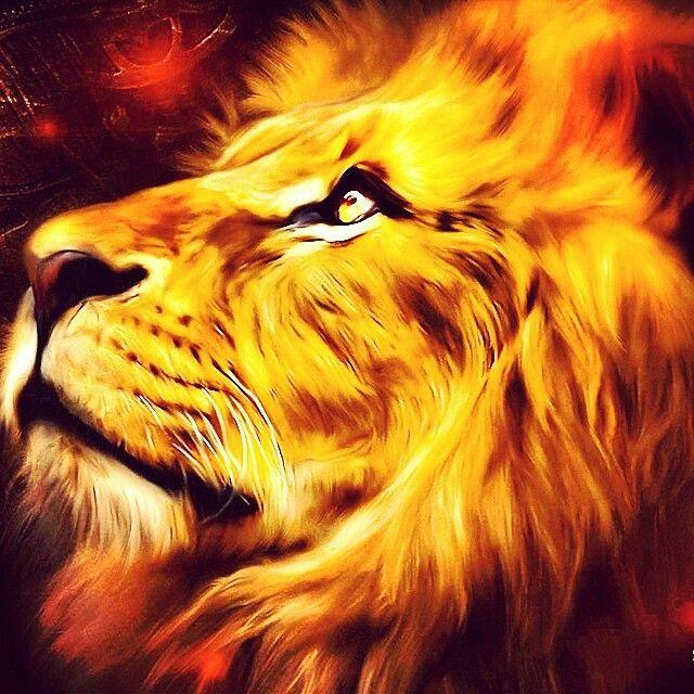 #PicOfTheDay #lion #I'mALeo #StrengthOfALion #LionStrong
