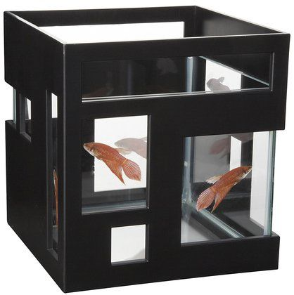 Umbra fish hotel black the o 39 jays hotels and fish for Umbra fish hotel