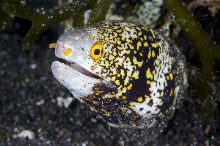 Moray Eel   Flickr - Photo Sharing!