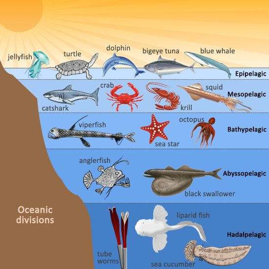 animals ocean ecosystem zones