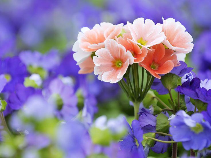 Die Besten 17 Bilder Zu Flower Lover - Misc. Auf Pinterest ... Nelken Im Garten Pflanzen Arten Blumen Tipps