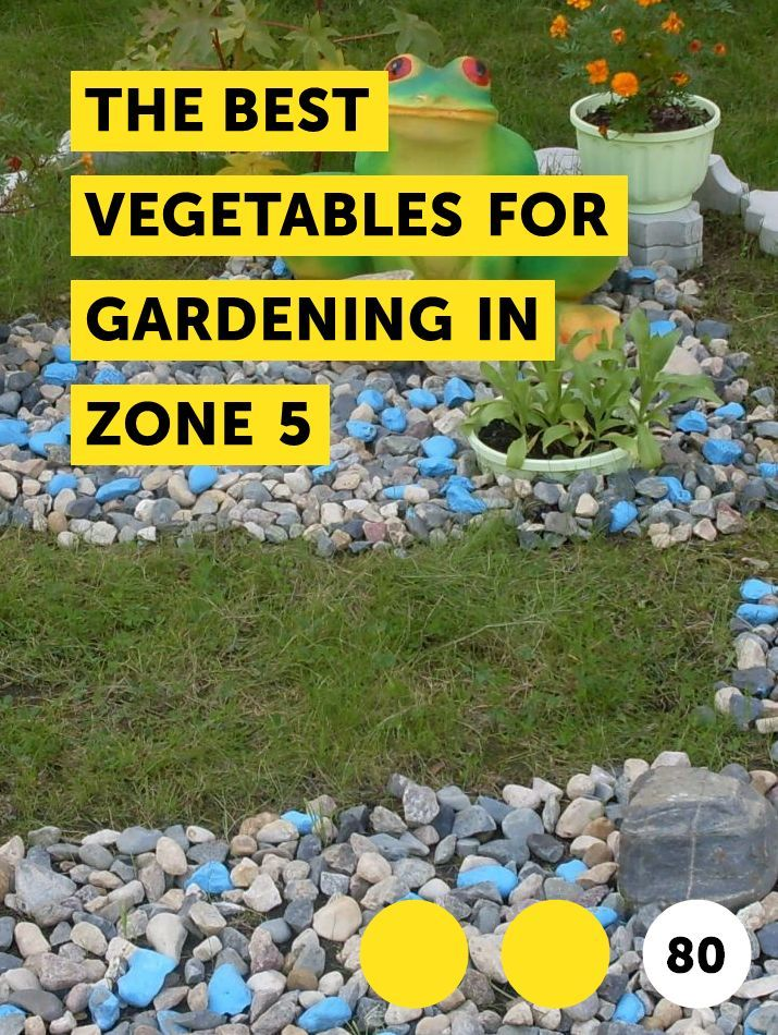 The Best Vegetables For Gardening In Zone 5 With Images Plants
