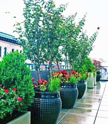 24 Best Our Rooftop Garden Images On Pinterest Roof Gardens Roof Terraces And Rooftop Gardens