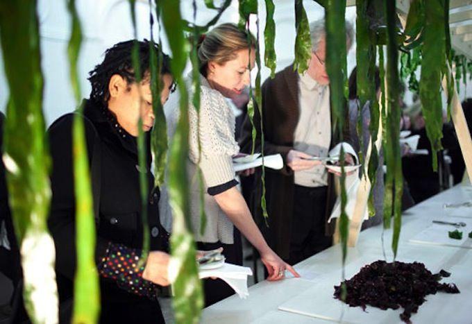 Zeegroenten installatie Katja Gruijters #seaweed #seavegetables #food