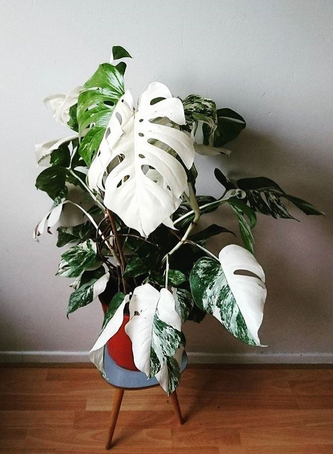 Low Maintenance Inside Plants