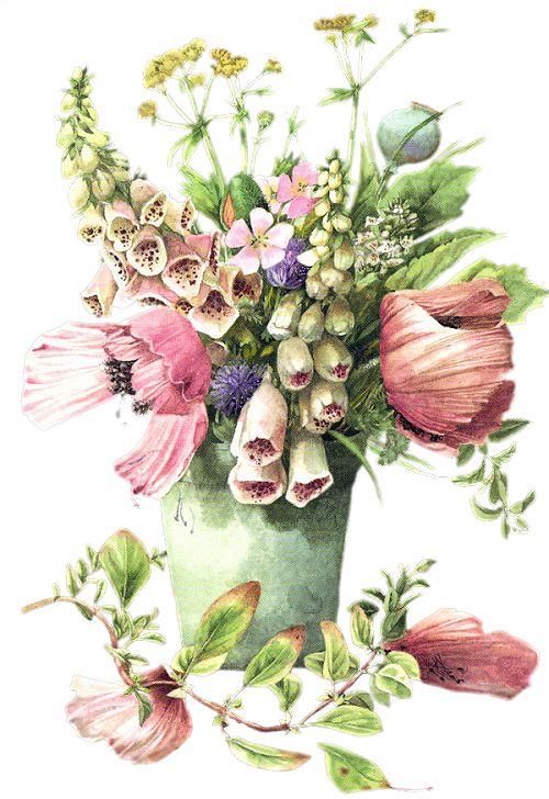 Коллекция картинок: Иллюстрации Bastin Marjolein 2