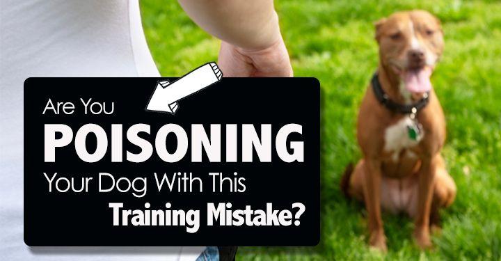 poisoned cue dog training