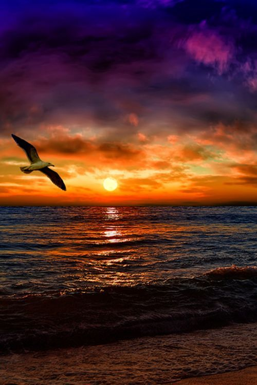 Seagull at sunset, Greece.  - Selected by www.oiamansion.com in Santorini.