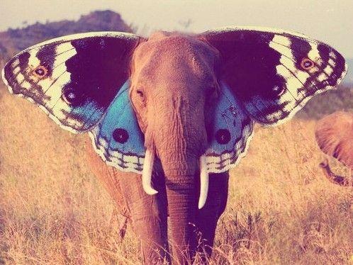 Happy Elephant: Butterflies Elephants, Elephants Ears, Beautiful, Art, Butterflies Wings, Things, Flying Away, Photography, Animal