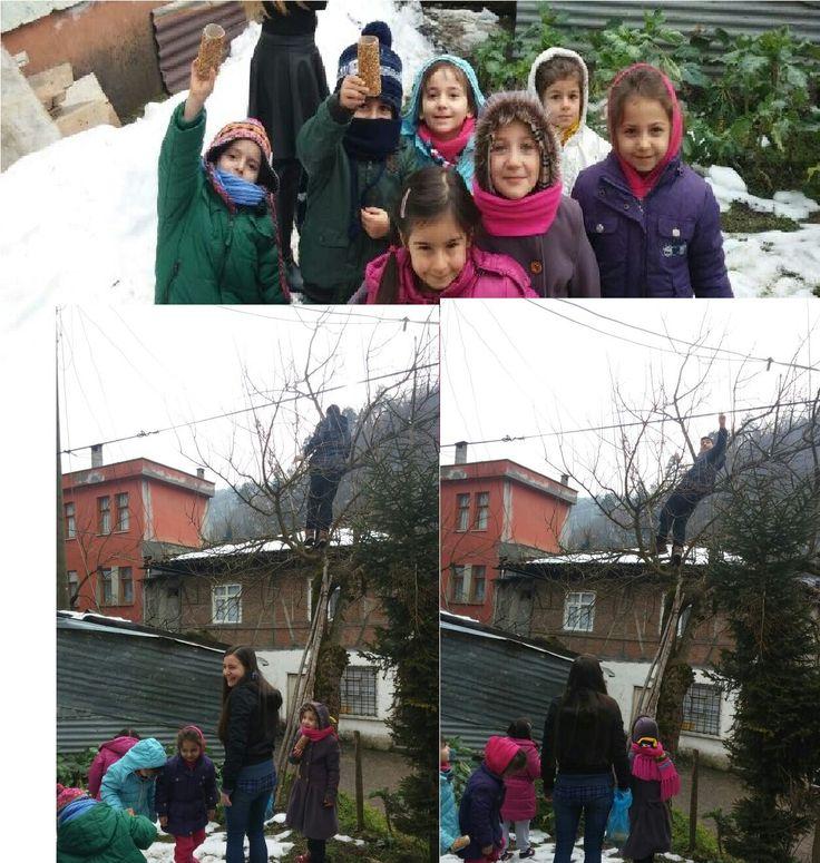 Tuvalet kağdı rulosuna bal sürüp, kuş yemine batırdık, ağaca astık. Köy okulunda fen çalışması bi başka :)