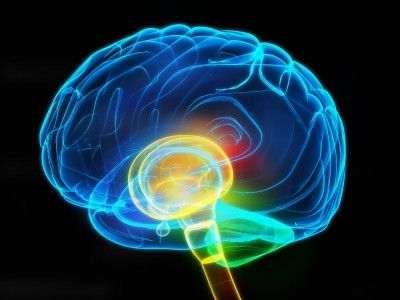 Some brains may be primed for pain  Addiction-related process may keep people hurting long after an injury heals