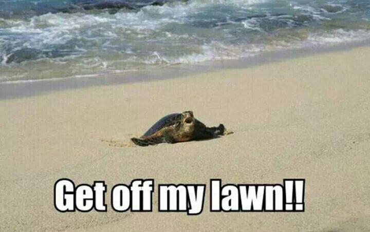 Get off my lawn! | Turtles | Pinterest