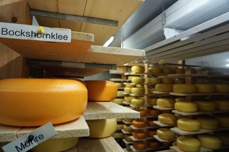 In Haus Bollheim kann man einen #Käsekurs machen. Lies mehr darüber im Artikel!