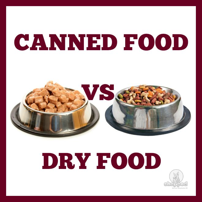 Advantages And Disadvantages Of Canned Dog Food