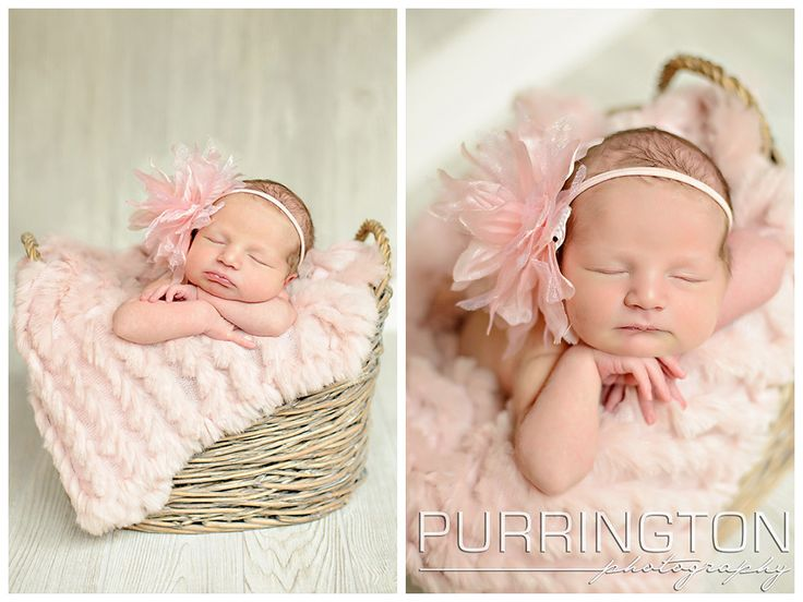 The cutest little lamb youll ever see bemidji newborn photographer