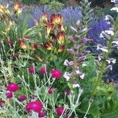 Shade Gardening Plants - Zone 9 - List of Shade plants for your garden. Photos included.