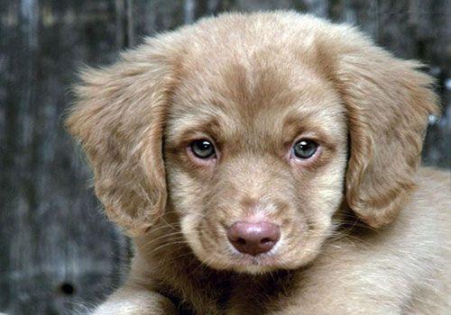 small hypoallergenic non shedding dogs - Google Search