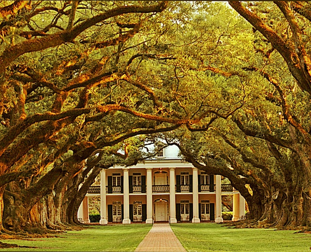 Oak Alley Plantation, Vacherie, LA. It was named for a remarkable quarter-mile double row of 28 live oaks, planted in the early 1700's by a French settler. The trees extended from the main house down to the shore of the Mississippi River.
